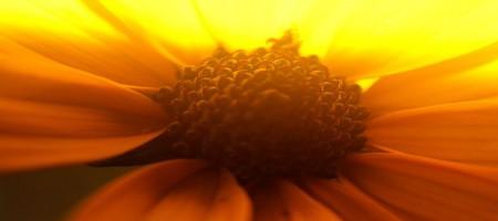 De kern van Haptonomie en Haptotherapie: jij gaat weer stralen